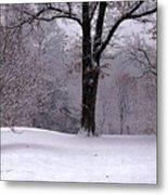 Winter White  Metal Print