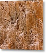 Winter Willow Branches Metal Print