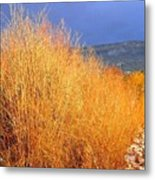 Winter Willows Metal Print