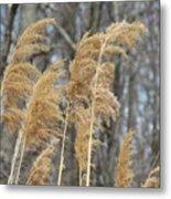 Winter Wind Metal Print