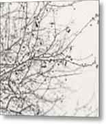 Winter's Berries In Black And White Metal Print