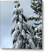Winter's Burden Metal Print