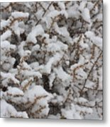 Winter's Contrast Metal Print