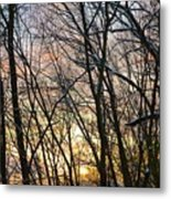 Winter's Delight Metal Print