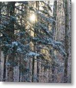Winter's Midday Light Metal Print