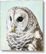 Winters Owl, Barred Hoot Owl Winter Snow Falling Metal Print