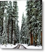 Wintry Forest Drive Metal Print