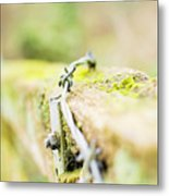 Wire On The Fence Metal Print