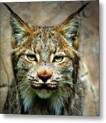 Wise Bob Cat Metal Print