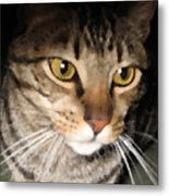 Wise Cat Metal Print