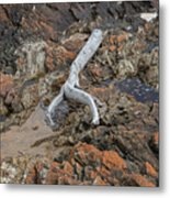 Wish Bone - Driftwood Metal Print