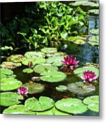 Wishes Among The Water Lilies Metal Print