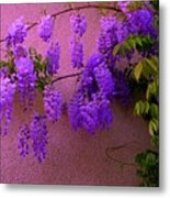 Wisteria At Sunset Metal Print