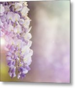 Wisteria Flowers In Sunlight Metal Print