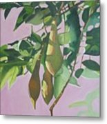 Wisteria Pod On Pink Background Metal Print