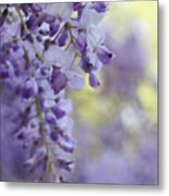 Wisteria's Soft Floral Whispers Metal Print