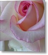 With A Dash Of Pink Metal Print