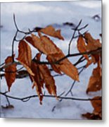 With Autumn's Passing Metal Print