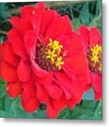 With Beauty As A Pure Red Rose Metal Print