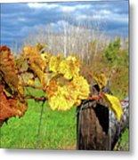 Withered Grape Vine Metal Print