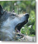 Wolf Bugged Metal Print