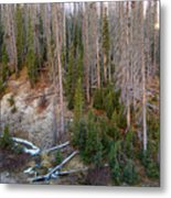 Wolf Creek Pass Forest Landscape Metal Print