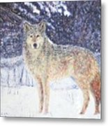 Wolf Of The North Metal Print
