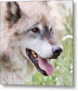 Wolf Smile Metal Print