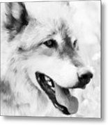 Wolf Smiling Black And White Metal Print