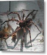 Wolf Spider Sunlight Metal Print