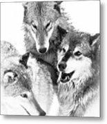 Wolf Triplets Metal Print