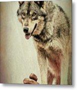Wolf Wonder Metal Print