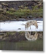 Wolflection Metal Print