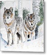 Wolves In The Birch Trees  Metal Print