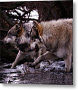 Wolves Synchronized Dancing Metal Print