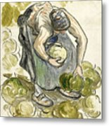 Woman Picking Cabbage Metal Print