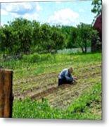Woman Planting Garden Near Barn Metal Print