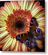 Wonderful Butterfly On Daisy Metal Print