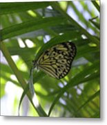 Wonderful Look At A Tree Nymph Butterfly In Foliage Metal Print