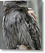 Wonderful Patterned Feathers On A Tawny Frogmouth Bird Metal Print