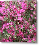 Wonderful Pink Azaleas Metal Print