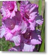 Wonderful Pink Gladiolus Metal Print