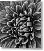 Wonderful Tones Dramantic Dahlia Metal Print