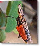 Wood Beetle Exploring Metal Print