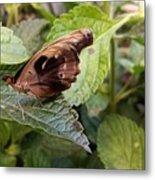 Wood Butterfly Metal Print