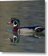 Wood Duck - Male Metal Print