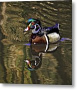 Wood Duck Autumn Reflections Metal Print