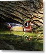 Wood Duck In Wood Metal Print