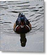 Wood Duck Male 20130924_268 Metal Print