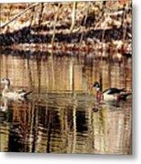Wood Ducks Enjoying The Pond Metal Print